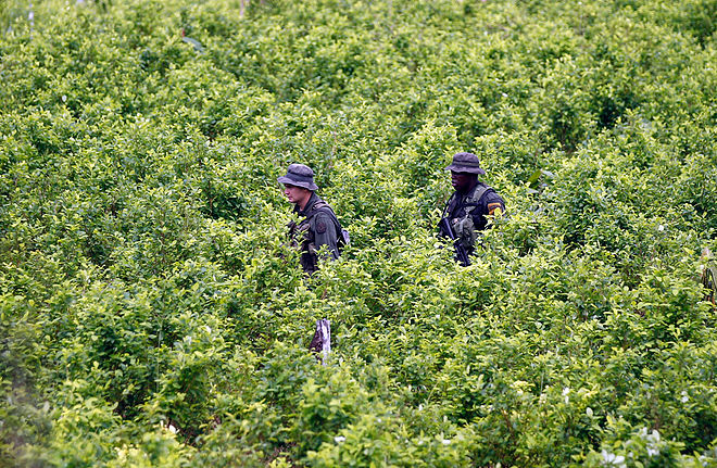 Colombia Drug Eradication