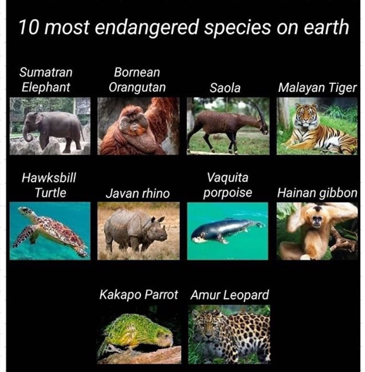 Top 10 endangered species onearth